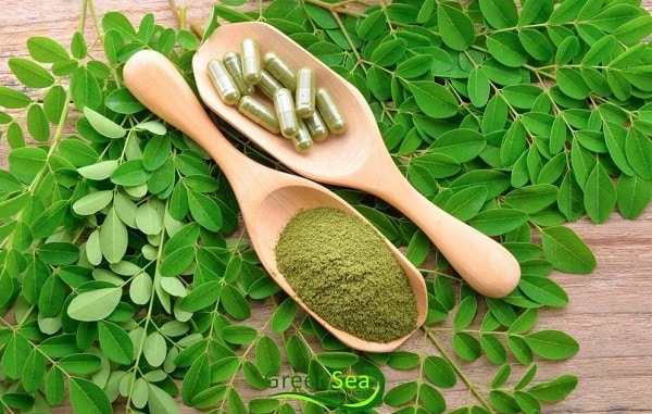 گیاه مورینگا سوپرفود لاغری